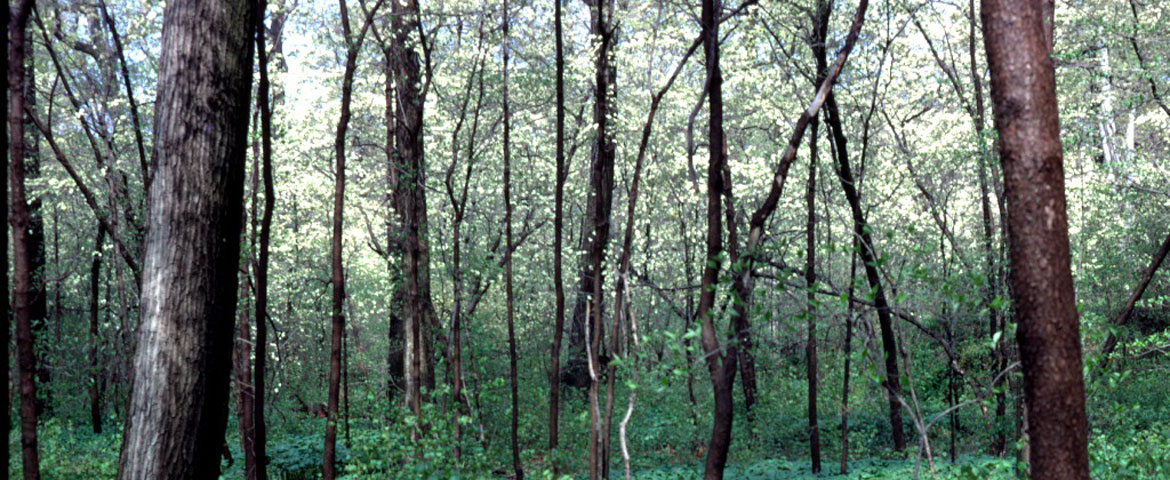 hutcheson memorial forest center at rutgers sebs